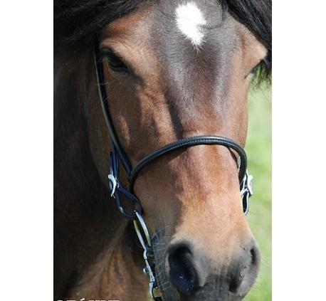 engl. Reithalfter Nordic Horse 3 Schlaufen, silber