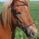 Nordic Horse engl. komb. Reithalfter mit Schlaufen, Löchern und einzelnen Steinen