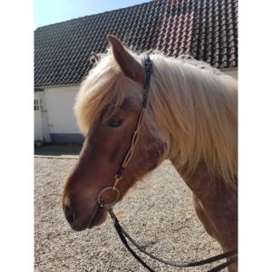 Nordic Horse Kopfstück (Nackenriemen) goldene Schlaufen, Nr. 132