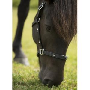 Nordic Horse Lederhalfter Julia schwarz mit jeweils 3 klaren Steinen