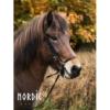 Nordic Horse hann. Reithalfter 15 Schlaufen Nasenstück u. Seitenteile, schwarz 396