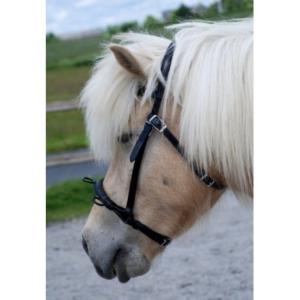 Nordic Horse Kappzaum schwarz, 3 Ringe
